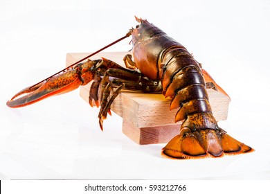 Raw canadian lobster on white background