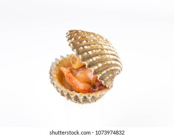 Raw cockle isolated on white background.seafood