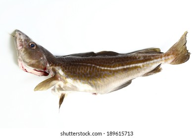 Raw cod fish on white background