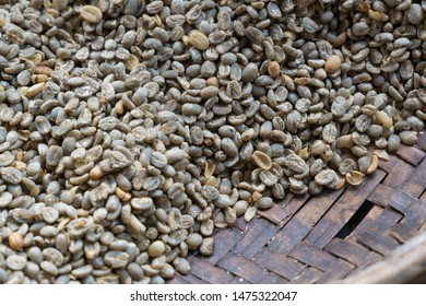 raw coffee beans in sagada phillipine