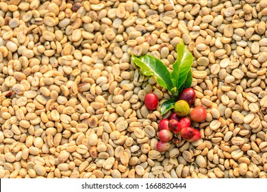 raw coffee and green leaf with coffee dry background abstract top view and selective focus