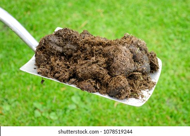 Raw compost horse manure on a gardening spade.