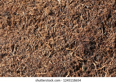 Raw compost tea manure; excellent, nutrient-rich organic fertilizer and soil conditioner. It is used in farming and small scale sustainable,organic farm / artvin / turkey