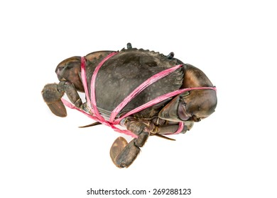 Raw Crab isolated on white background