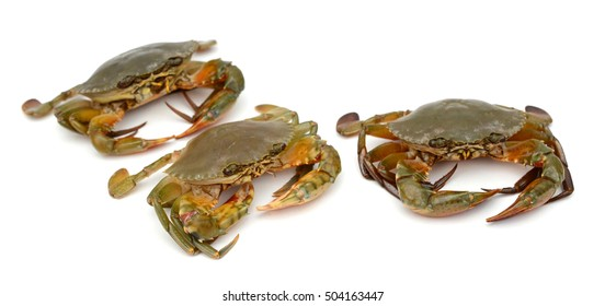 Raw crabs isolated on white