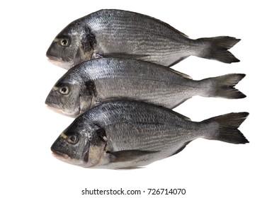 Raw dorado fish on white background. Top view.