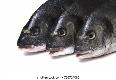 Raw dorado fish on white background. Close up view.