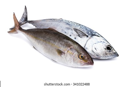 Raw fish, Bonito and Yellowtail, isolated on white with shadow