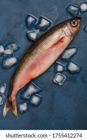 Raw fish carcass Redbait or Bonnetmouth or Emmelichthys nitidus on blue background.  Top view