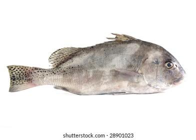 Raw fish isolated