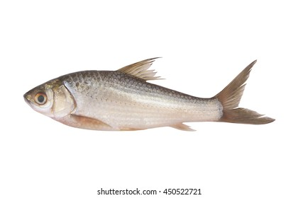Raw fish isolated on white background