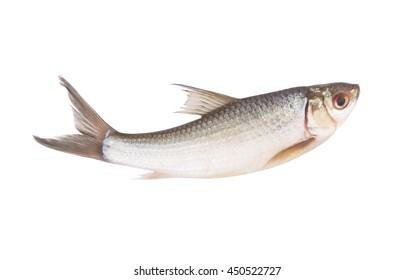 Raw fish isolated on white background
