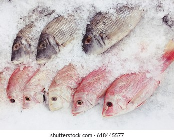 Raw fishes in the market. Nile tilapias and Jullien's golden carps on ice exposition sea market.