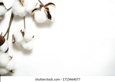 Raw fluffy cotton buds on white background and recycled timber