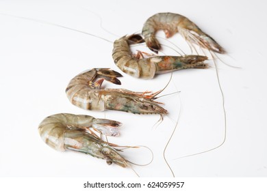 Raw food shrimp with white background