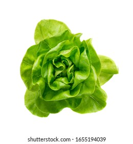 Raw fresh boston lettuce salad or butterhead isolated on white background. Green leaf salat plant top view - Shutterstock ID 1655194039