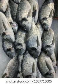 Raw fresh gilt-head bream fish on mediterranean market counter. Many fish Dorado. Close-up raw fresh sea bream fish on ice in market store. Dorado fish background. Health food concept