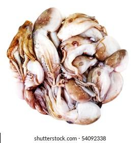 raw fresh octopus - calamari seafood isolated