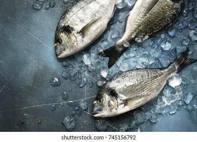 Raw fresh organic dorado or sea bream on ice cubes over blue slate,stone or concrete background.Top view .