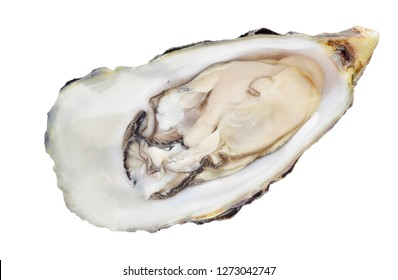 Raw fresh oyster flat lay isolated on white