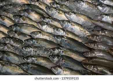 Raw fresh Tuna Fish on ice arrangement displayed in fresh Food Market Concept