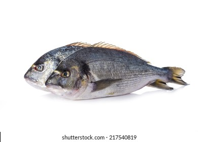 Raw gilt-head sea bream fishes isolated on a white background