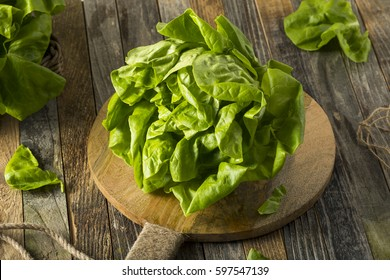 Raw Green Organic Boston Butter Lettuce Ready to Chop