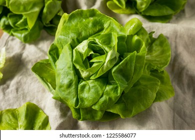Raw Green Organic Butter Lettuce Ready to Eat