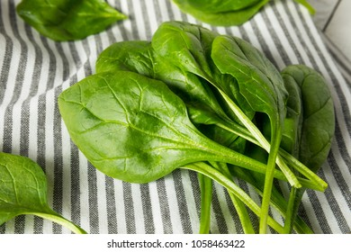 Raw Green Organic Spinach Leaves Ready to Cook