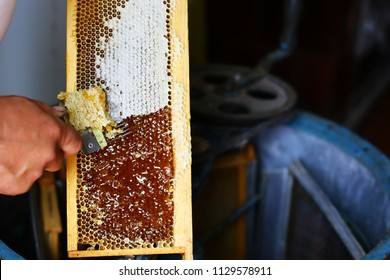 Raw honey being harvested from bee hives. Beekeeper uncapping honeycomb with special beekeeping fork. Beekeeping concept.