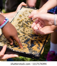 raw honey in a frame demonstrated and sampled by children. bees and fingers close up.