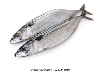 raw mackerel fish on white isolated background