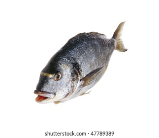 raw mediterranean fish on the isolated white background