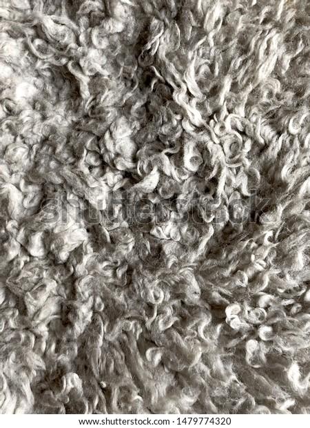 raw sheep fleece dark wool