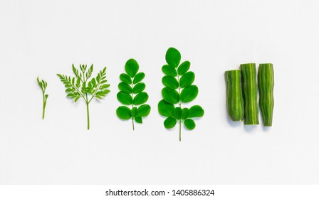 Raw of monriga plant leaf and drumstick on white background.