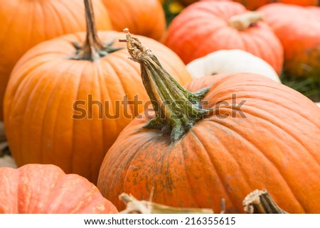 Raw multicolored pumpkins as a symbol of Halloween