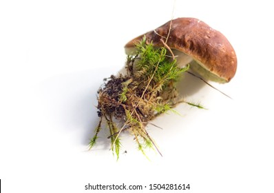 Raw mushrooms collection. Boletus isolated on white