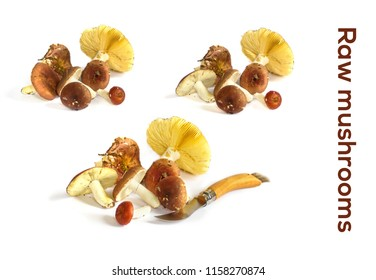 Raw mushrooms collection. Chantrelles isolated on white