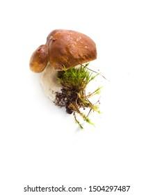 Raw mushrooms collection. Single Boletus isolated on white background