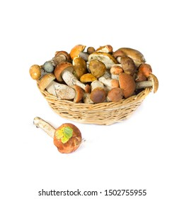 Raw mushrooms collection. Stacks of Boletus isolated on white background