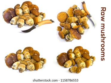 Raw mushrooms collection. Stacks of Cep on isolated white background