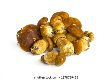 Raw mushrooms collection. Stacks of Cep isolated on white background