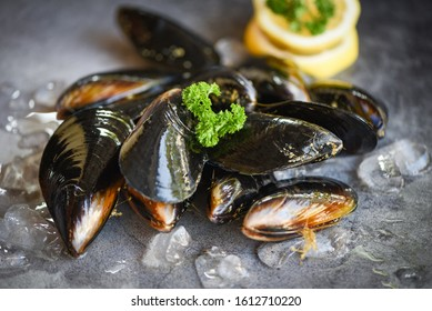 Raw Mussels with herbs lemon and dark plate background / Fresh seafood shellfish on ice in the restaurant or for sale in the market mussel shell food