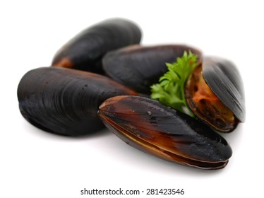 raw mussels on white background