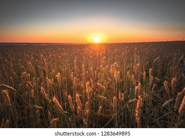 Raw natural food background. Sunset sky with clouds over rural scene. Green autumn wheat field. Sunny evening rays of sun