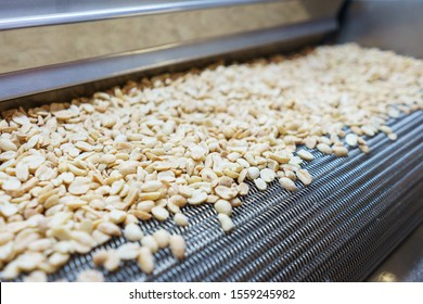 Rohe Nüsse auf einem Förderband. Trocknen, Rösten und Verpacken, die Herstellung von leichten Snacks. Fabrikproduktion.