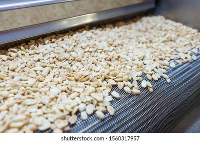 Raw nuts on a conveyor belt. Drying, roasting and packaging, the production process of light snacks. Factory production.