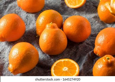 Raw Orange Organic Mineola Tangelo Fruit Ready to Eat