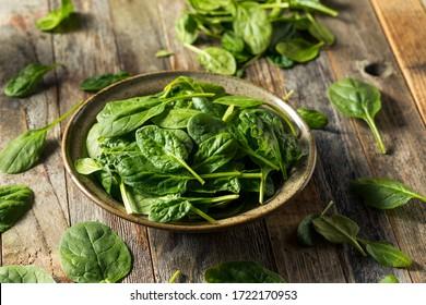 Raw Organic Fresh Baby Spinach in a Bowl