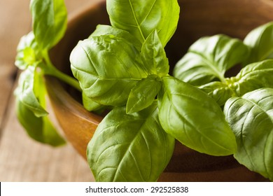 Raw Organic Green Basil Ready to Cook With